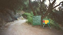 Photograph of Track in Olive Groves